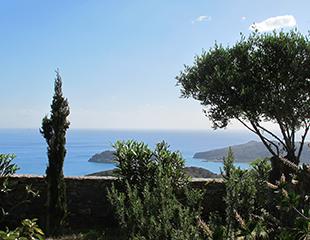 cypress_view
